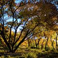 Bosque Color by Jeff Phillippi