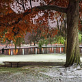 Boston Snowfall In The Boston Public Garden Boston Ma Autumn Tree by Toby McGuire