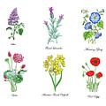 Botanical Watercolor Flowers Collection I by Irina Sztukowski