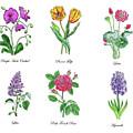 Botanical Watercolor Flowers Collection V by Irina Sztukowski