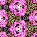 Bougainvillea Flowers And Coleus Kaleidoscope Abstract by Rose Santuci-Sofranko