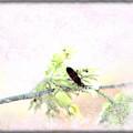 Boxelder Bug In Morning Haze by Colleen Cornelius