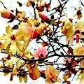 Branch Of Magnolia Flowers by Cynthia Guinn