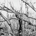 Branches In Black And White by Brian K Leonard