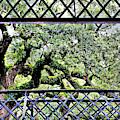 Bridge Through Live Oaks by Diann Fisher
