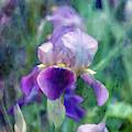 Bright Iris 6816 Idp_2 by Steven Ward