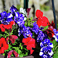 Bright Summer Flowers by Kae Cheatham