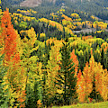 Brilliant Colorado Fall Colors by Ray Mathis