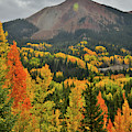 Brilliantly Colored Aspens At Red Mountain Pass by Ray Mathis