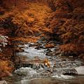 Brisk Autumn Stream by Jai Johnson