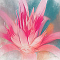 Bromeliad Abstract by Deborah Benoit