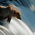 Brown Bear At Brooks Falls by Mark Newman