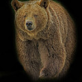 Brown Bear In Darkness by Larry Linton