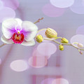 Bubbly Orchid by Kay Brewer