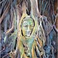 Buddha Head In Tree Roots by Wachira Kacharat