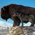 Buffalo And Wolf by Daniel Eskridge