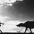 Buffalo Drag by Keystone