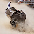 Bull Riding by Delphimages Photo Creations