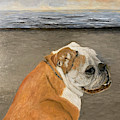 Bulldog  On The Beach by Karen Zuk Rosenblatt