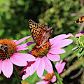 Bumble Bee And Butterflies by Trina Ansel