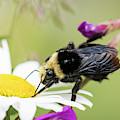 Bumble Bee Fuel Stop by Robert Potts