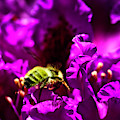 Bumble Bee On A Rhodedendron  by Bruce Block