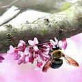 Bumblebee On Redbud Flower by Trina Ansel