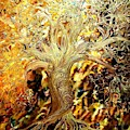 Burning Bush by Stefan Duncan
