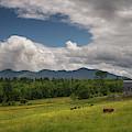 Buttercup Farm by Darylann Leonard Photography