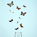 Butterflies Escaping From Jar by Martin Poole
