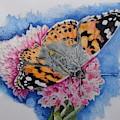 Butterfly At Lunch by ILona Halderman