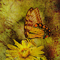 Butterfly Effect by Keith Smith