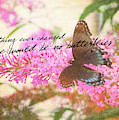 Butterfly Kisses Quote by JAMART Photography