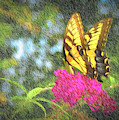 Butterfly Likeness  by Ches Black