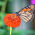 Butterfly by Michelle Wittensoldner