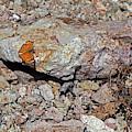 Butterfly Rock by Chance Kafka