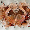 Butterfly Splash by Jacqui Boonstra