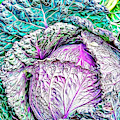 Cabbage by Russ Carts