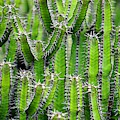 Cacti Wall by Top Wallpapers