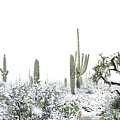 Cactus In The Snow by Jean Clark