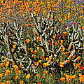 Cactus Poppies And Bluebells by Glenn McCarthy Art and Photography