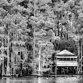 Caddo Lake Black And White by JC Findley