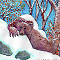 Caden's Bear 3 by Amy E Fraser and Caden Fraser Perkins