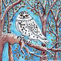 Caden's Owl by Amy E Fraser and Caden Fraser Perkins