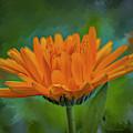Calendula Officinalis #i9 by Leif Sohlman