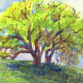 California Oak In Spring by Judith Kunzle