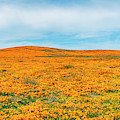 California Poppies - 2019 #2 by Gene Parks