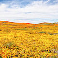 California Poppy Superbloom 2019 - Panorama #2 by Gene Parks
