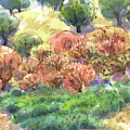 Buckeye Trees In June by Judith Kunzle