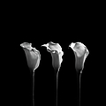 Calla Lilies In Black And White by Alfonse Pagano